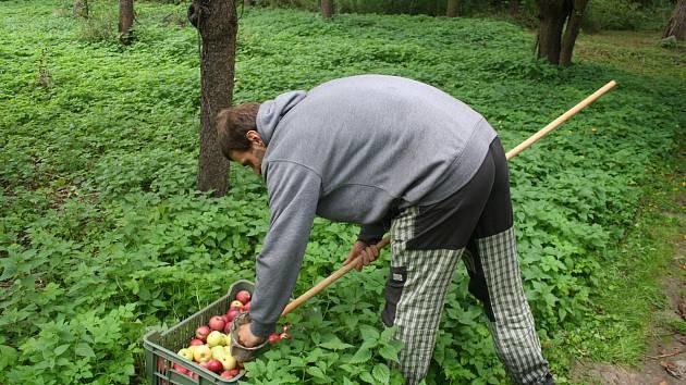 Spolek Slezské Odrůdy Má Vizi Městského Sadu