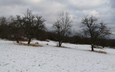 Nakonec I Trocha Sněhu V Obcích Žáry A Česká Ves